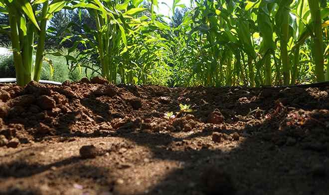 global_soil_week