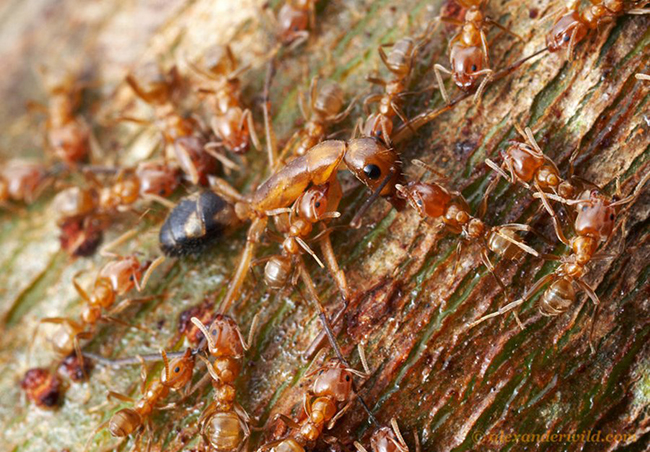 kartinki24_insects_ants_0033